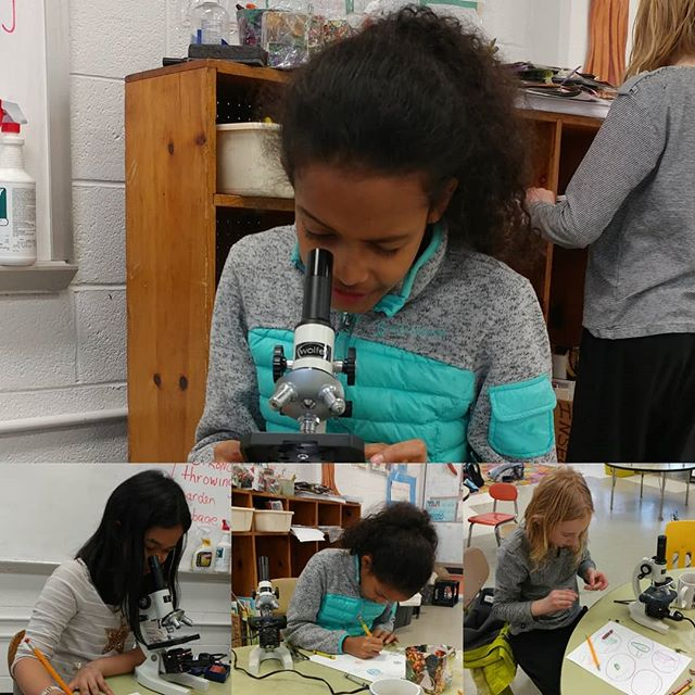 A little #science to start your Sunday. #microscopes #microscopy #girlsinSTEM #STEMgirls #WomeninSTEM #WOCinSTEM #FiLS #livelearnshare