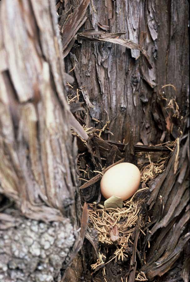 slife_egg5.jpg
