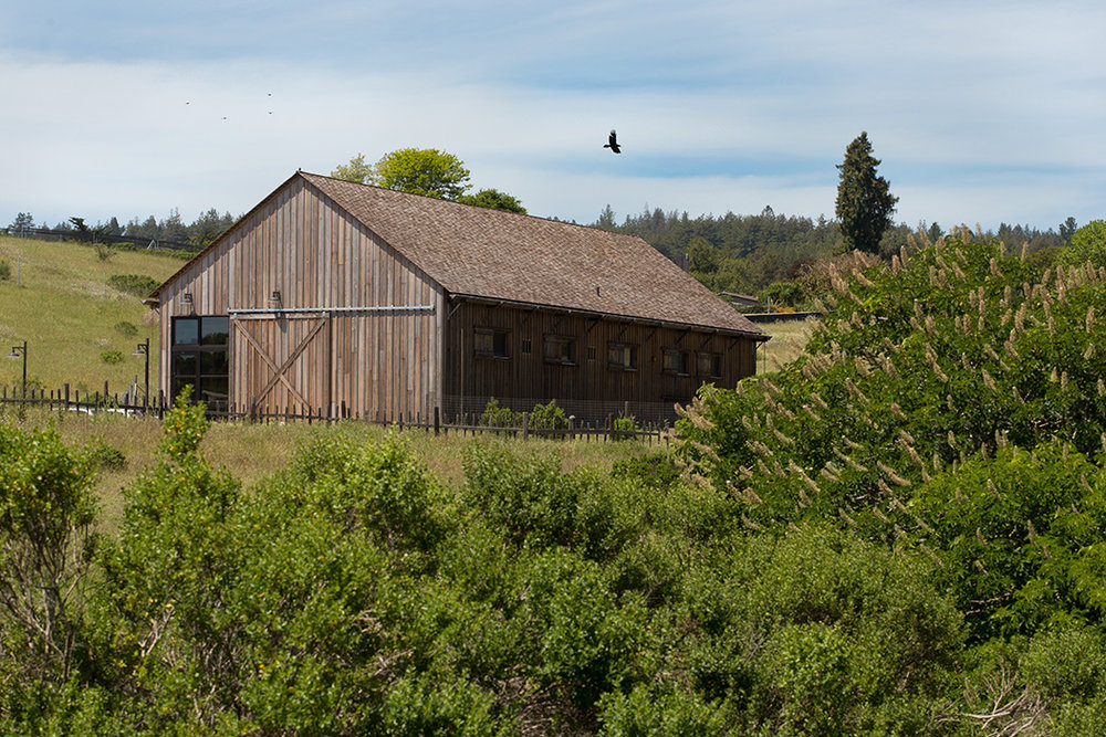 Photo: Holly Lepere, Lepere Studio - UC Santa Cruz / Hay Barn — Joni L Janecki And Associates Landscape