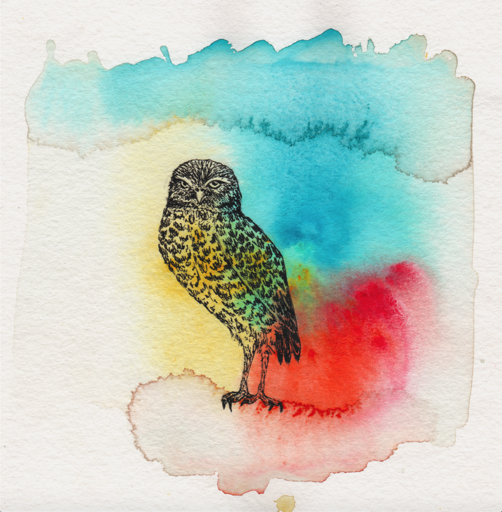 True Owl SS.png