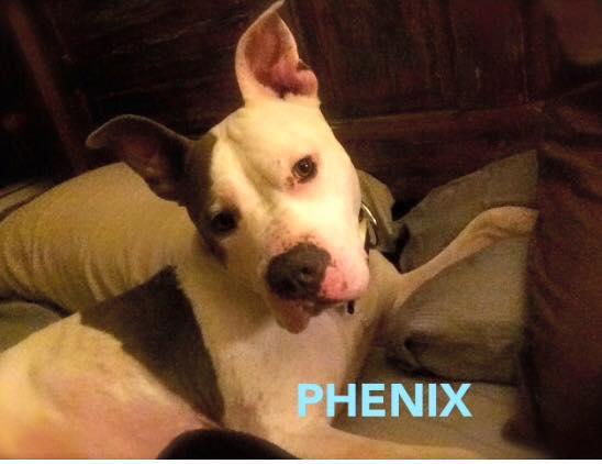 Poppa (Now Phenix)