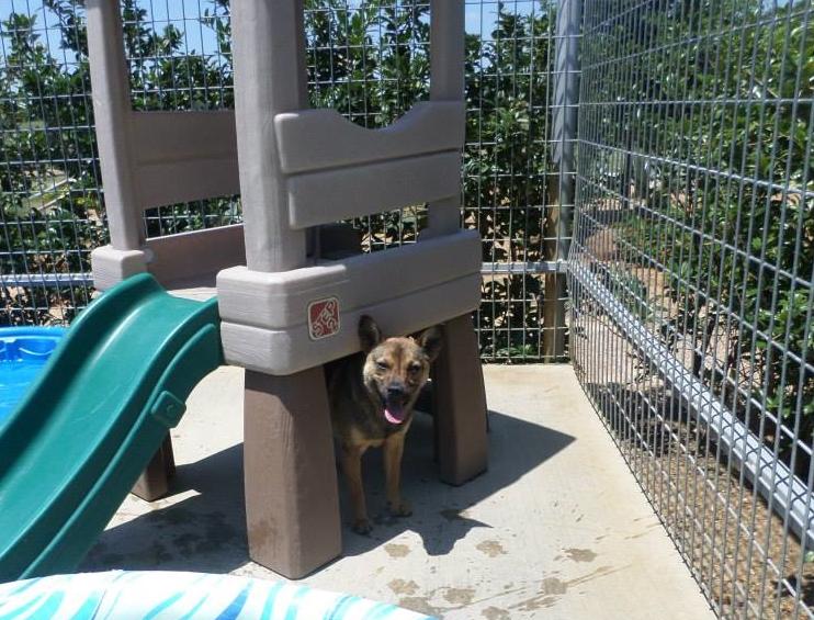 Willow playground.jpg