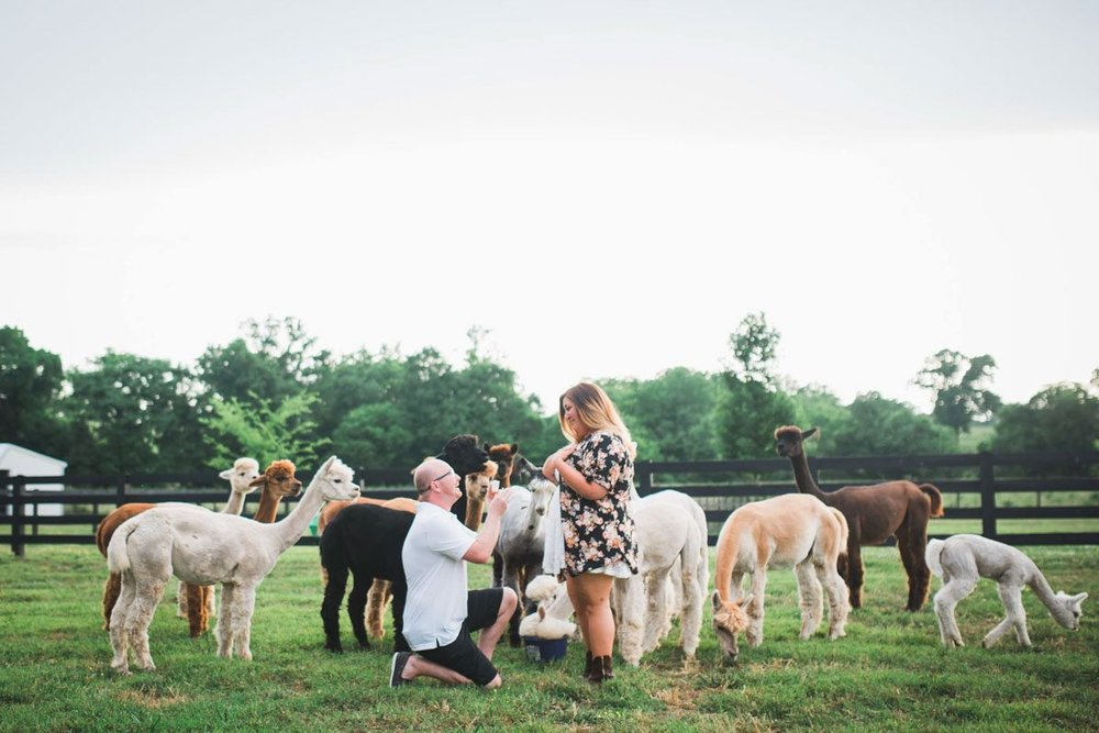 alpaca-farm-proposal-john-myers_.jpg