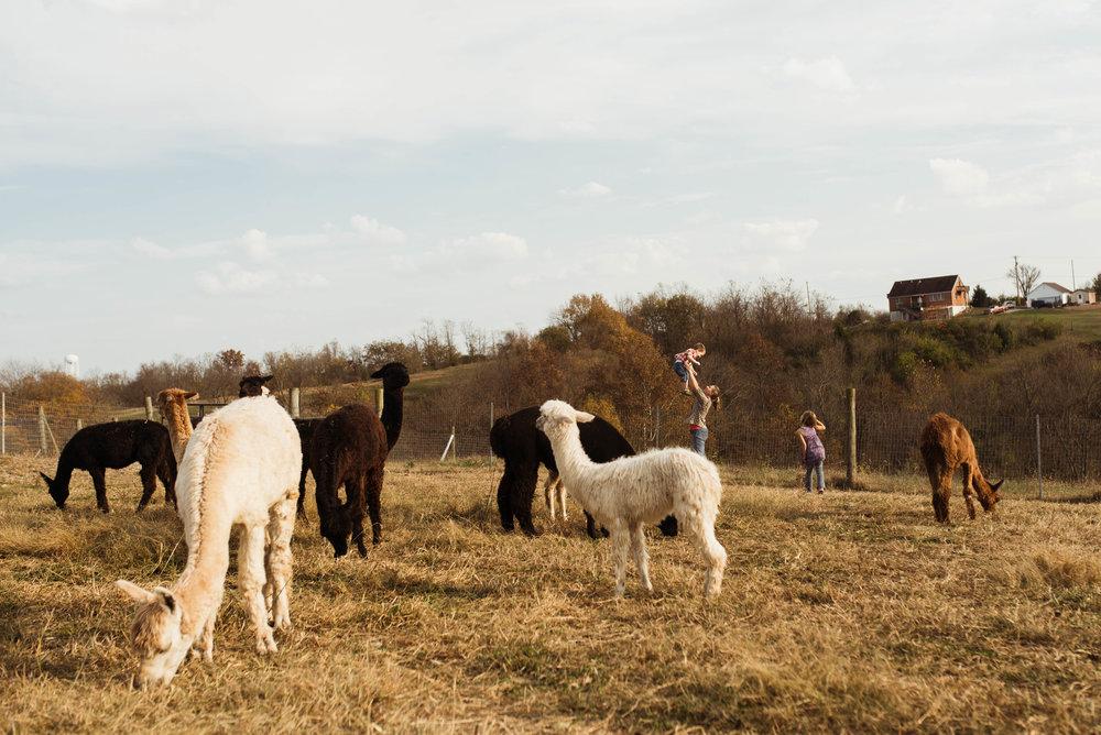 alvina aidyn and sean behind alpacas.jpg