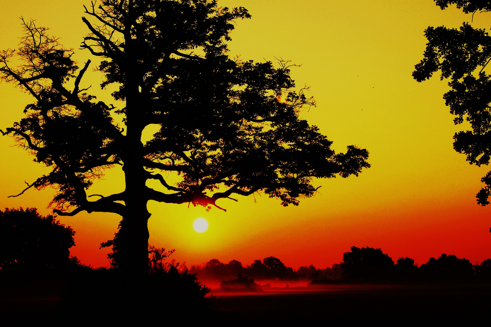Elegant Tree in the Sunrise Light