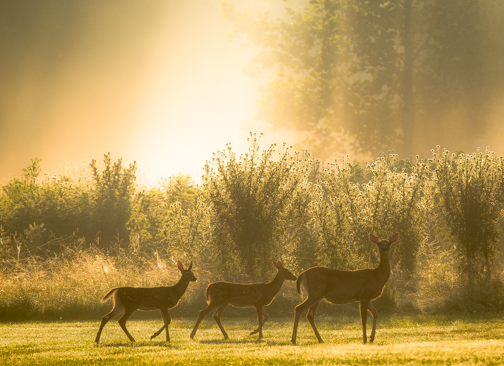 Family Outing at Sunrise