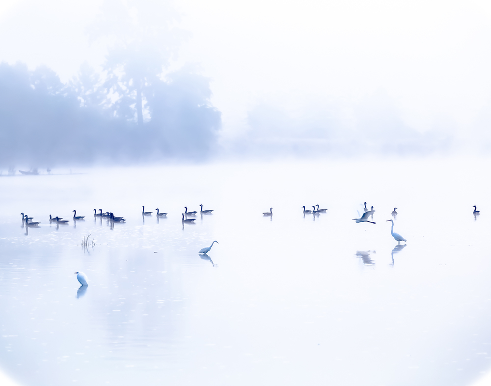 Misty Gathering at the River