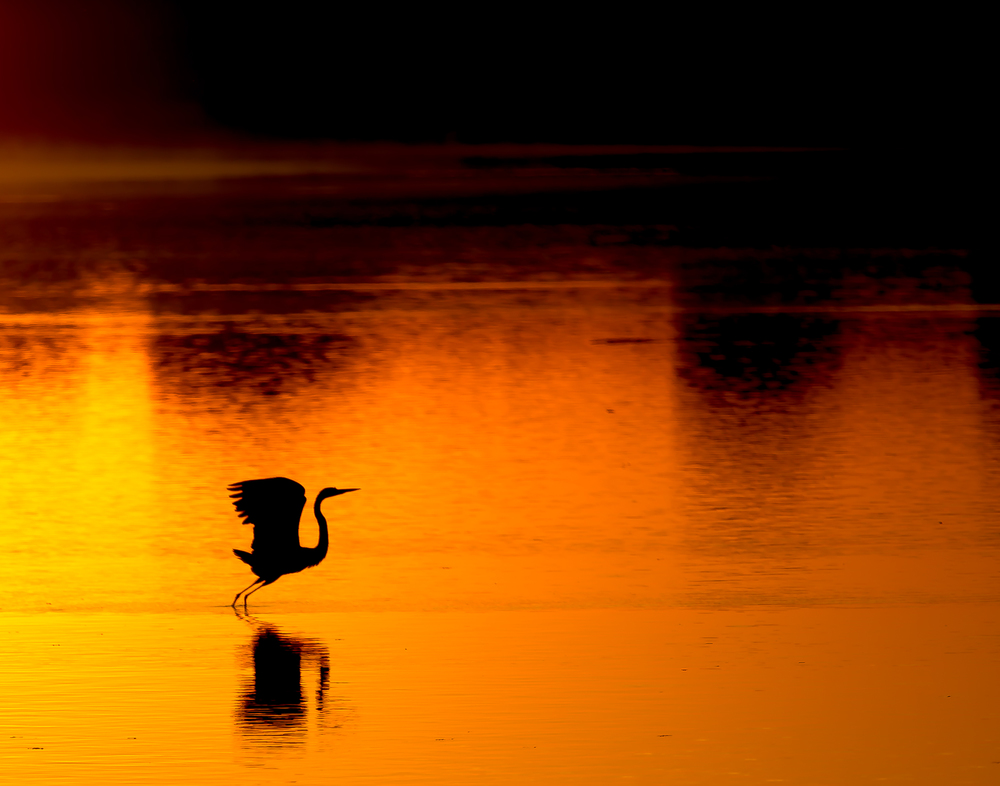 Elegance of the Egret at Dawn