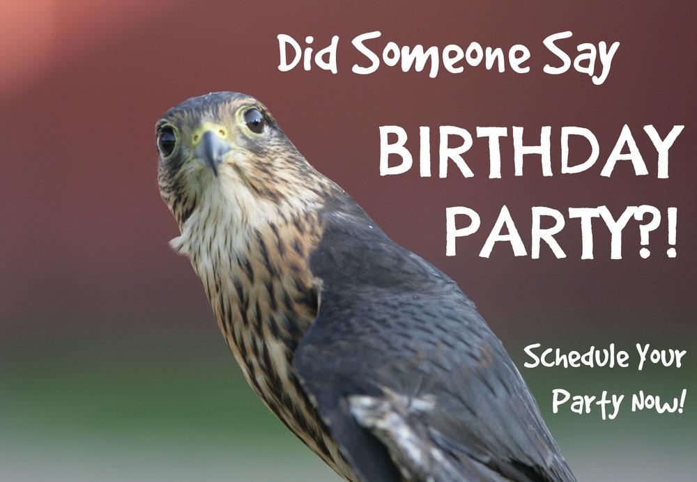 2-falcon-wsc-birthday-party-mn-22.jpg
