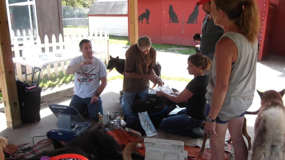 training-research-wildlife-wolf-WSC-mn-3.jpg