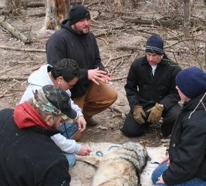 Staff_Matt_wsc_teaching_program_wolf.jpg