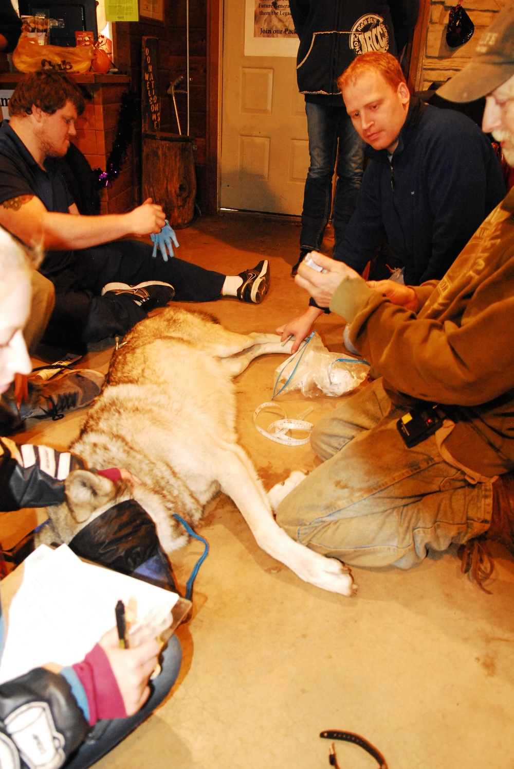 training-research-wildlife-wolf-WSC-mn-1.jpg