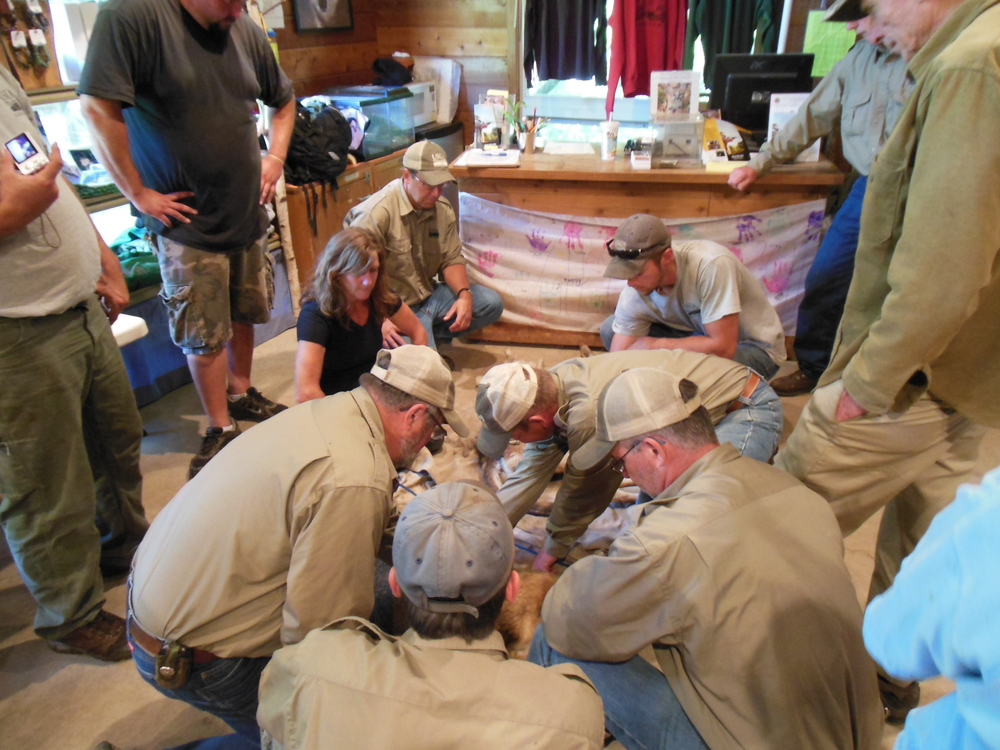 training-science-wildlife-wolf-minnesota-WSC-2015.jpg