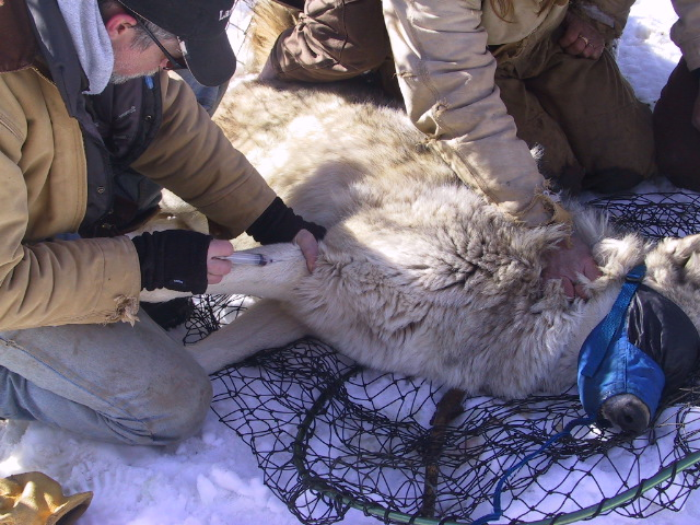 wildlife-science-training-minnesota-WSC-2015-1.jpg