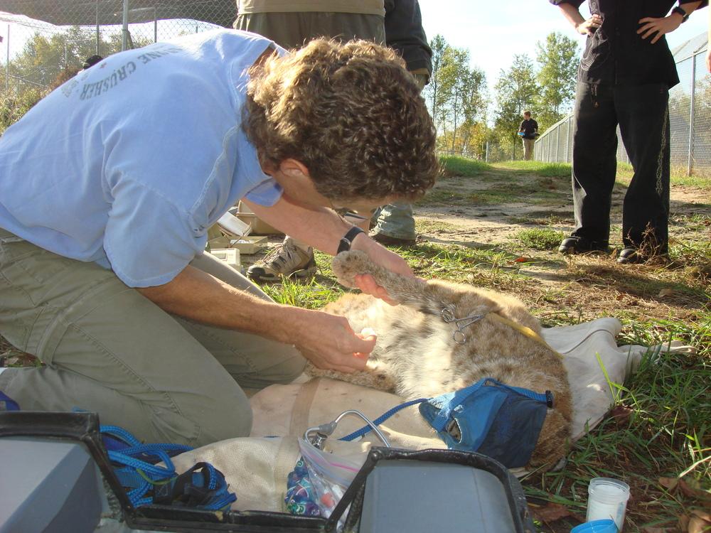 training-research-wildlife-wolf-WSC-mn-2.jpg