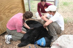 research-bear-wsc-science-mn.jpg