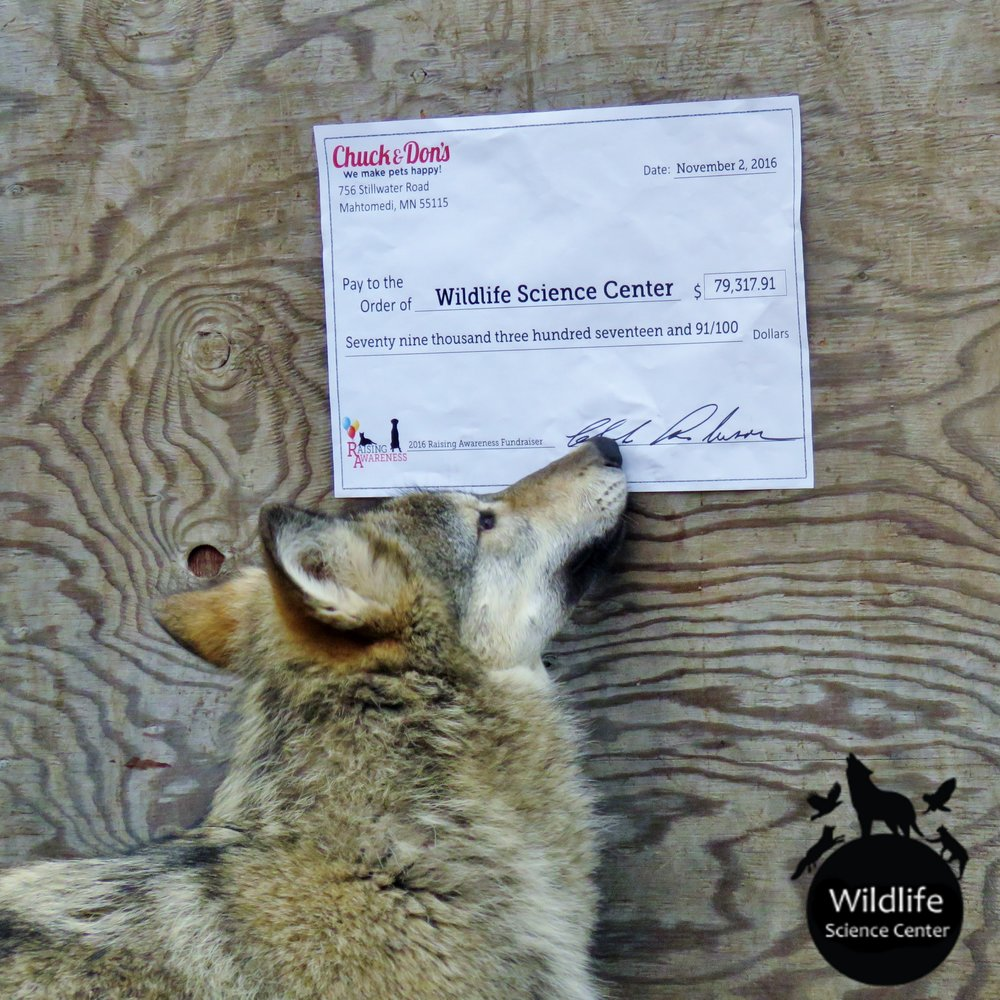 The 2016 wolf pups were quite excited about Chuck and Don's extremely generous donation!