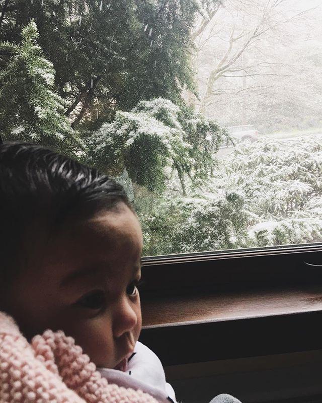 Let the Seattle Snowpocalypse begin!
