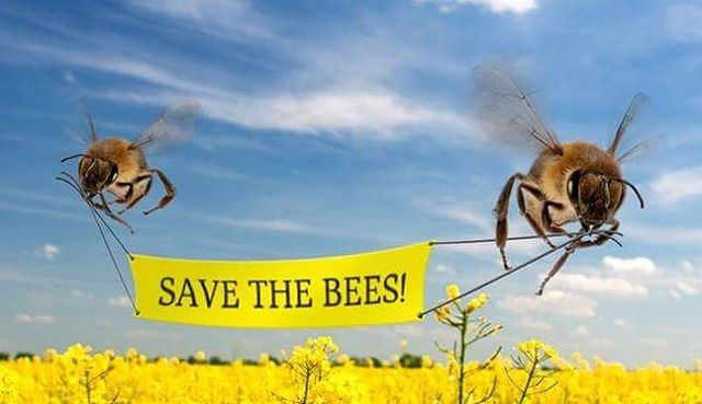 With every Busy Bee Yerba Maté purchase, you help #savethebees 🐝 Do your part! #xercessociety #busybeemate #allbuzznocrash #getbusy #atx #beefriendly #royalbluegrocery #wholefoods