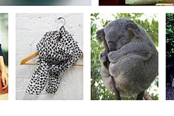 Quanta_Koala.png