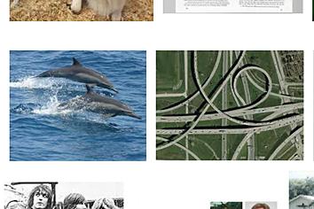 Quanta_Dolphins.png
