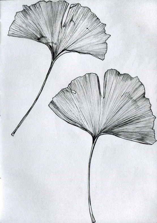 Hard/drive♢Ginko-leaf_MillicentHawk