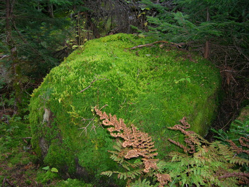 moss covered boulder                                                                                                                                   ♡  ♡  ♡