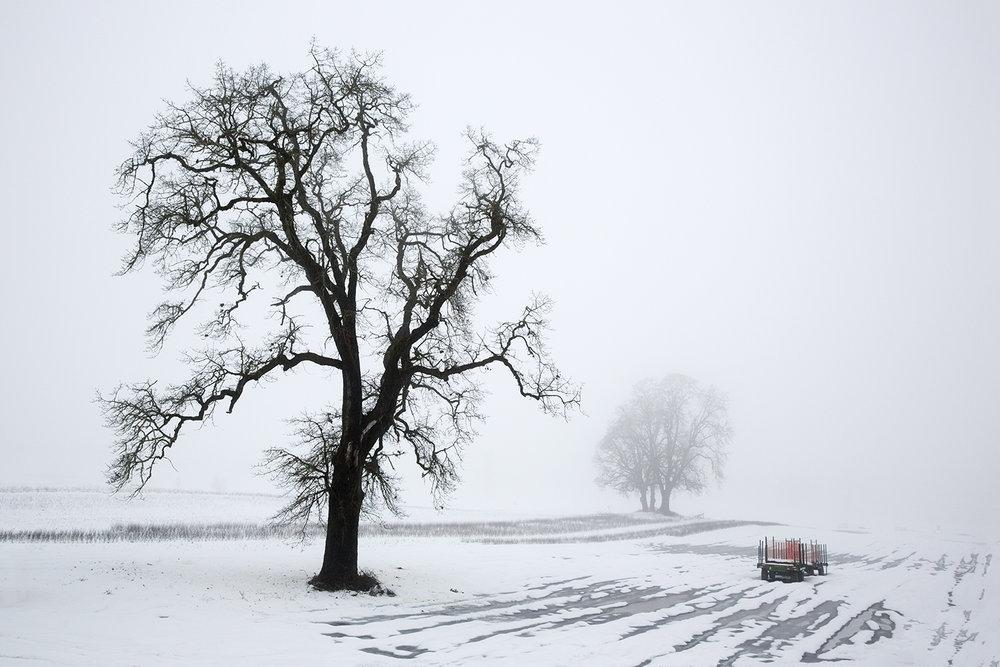 Tree A7688.jpg