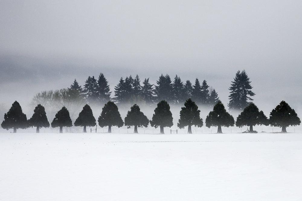 Trees 7416.jpg