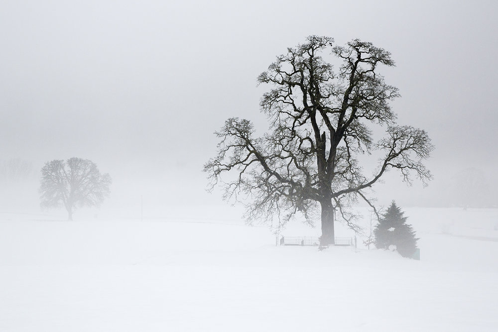 Trees 7506.jpg