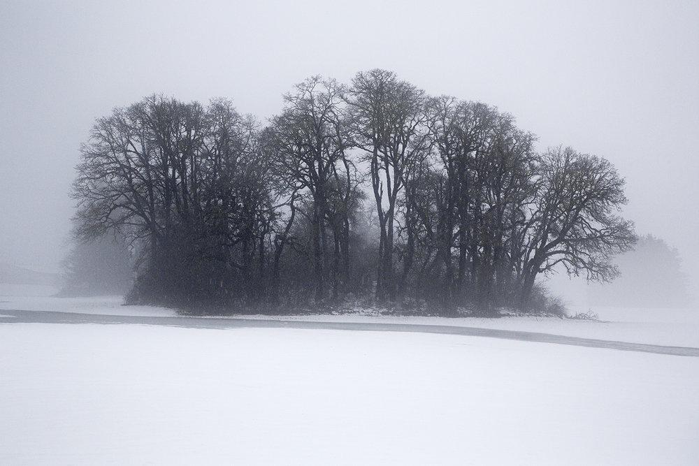Trees 7578.jpg