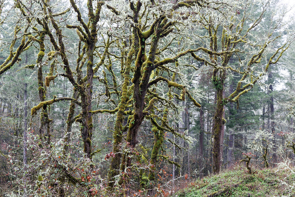 Trees 5323.jpg