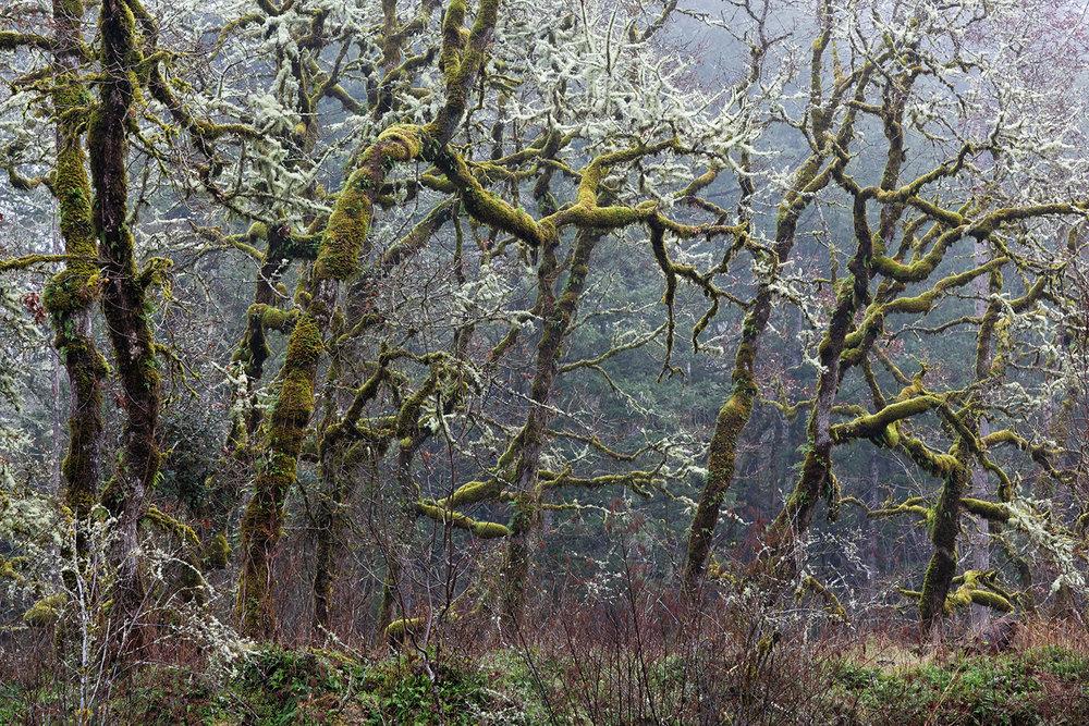 Trees 6888.jpg