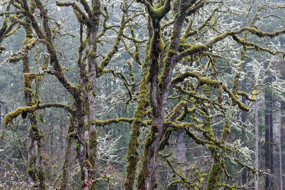 Trees 6891.jpg