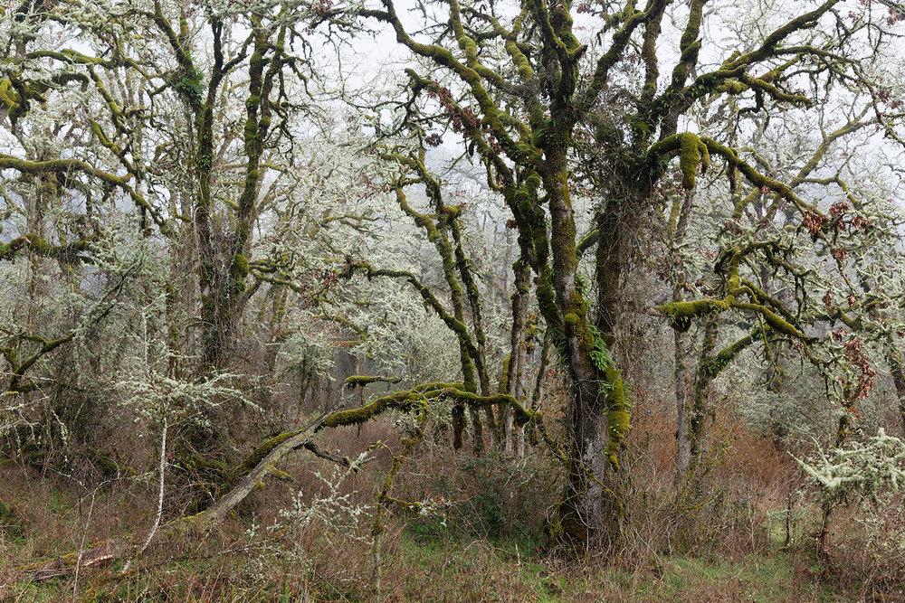 Trees 6982.jpg