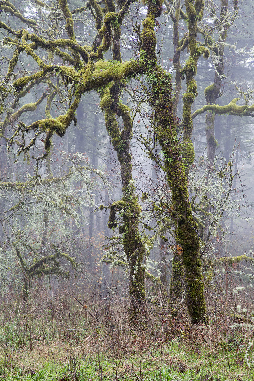 Trees A5518.jpg