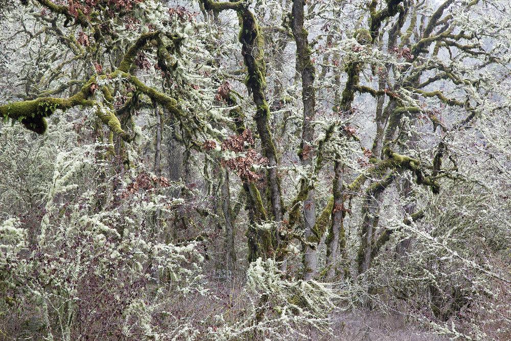Trees A6661.jpg