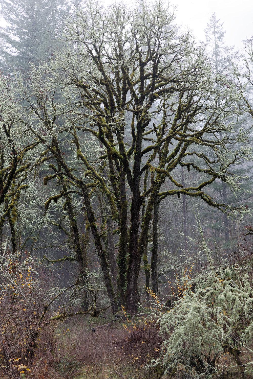 Trees5605.jpg