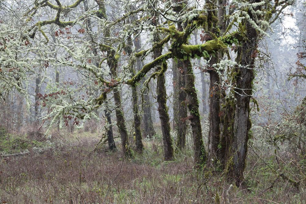 Treew 5282.jpg