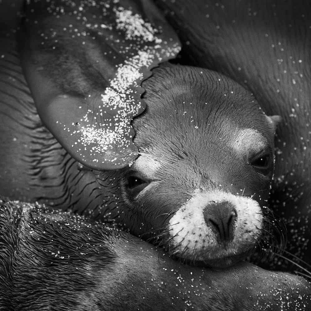 Pup Luv.jpg