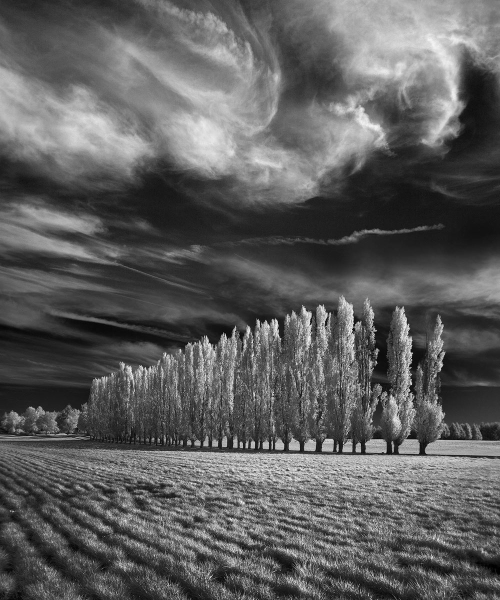 70 Poplars.jpg