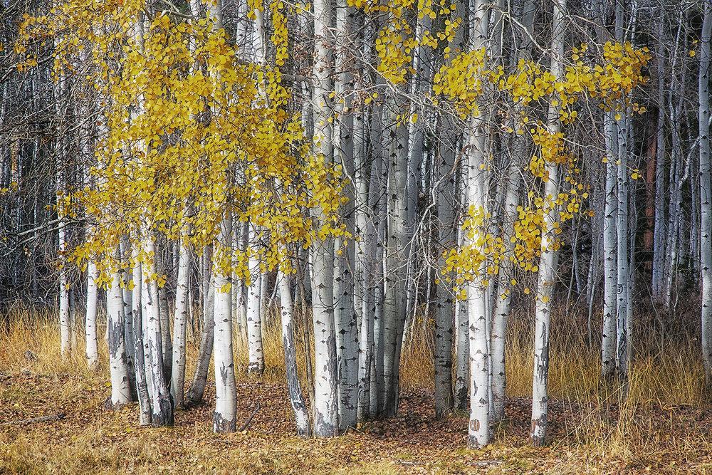 Trees 1221.jpg