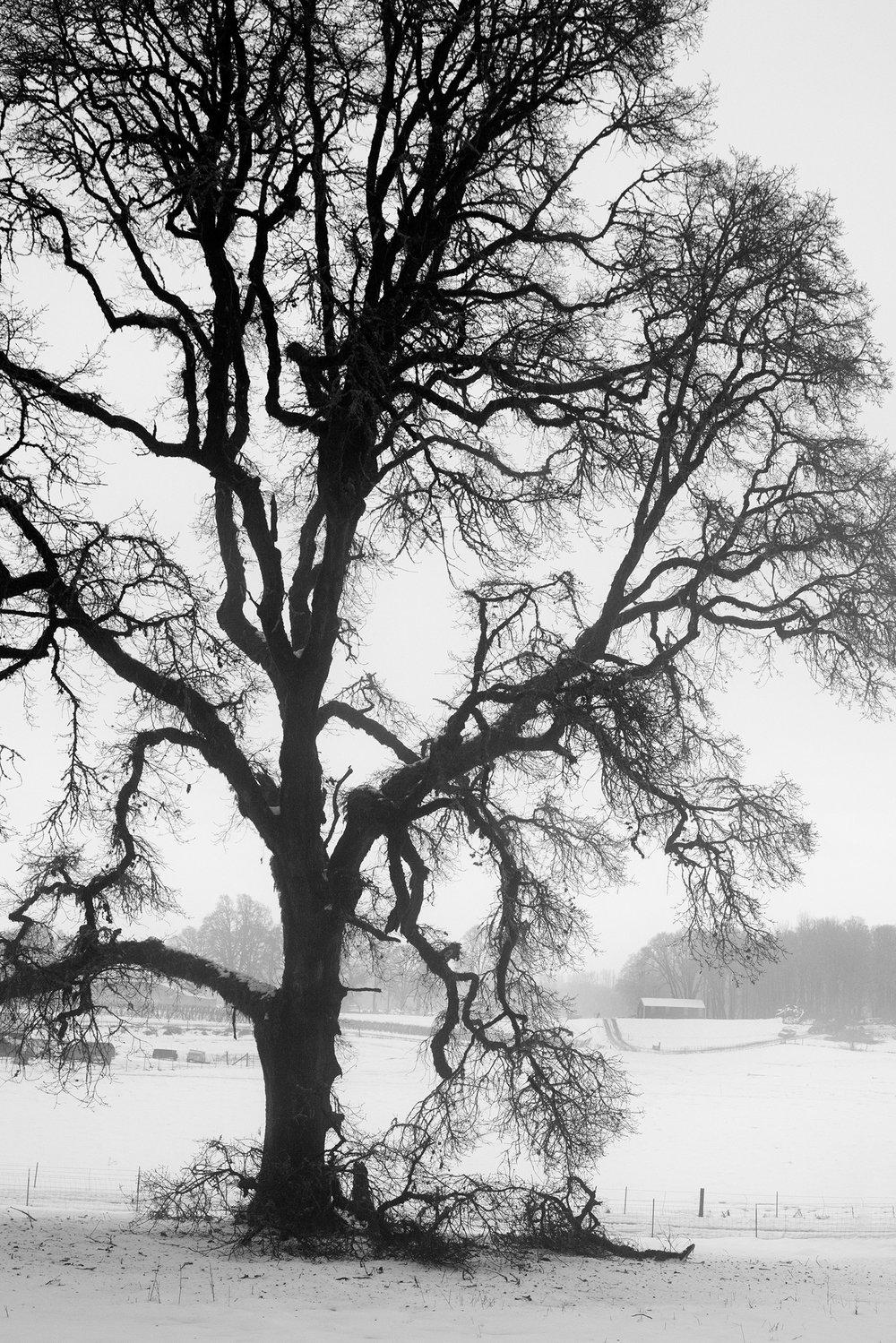 Trees A7705 B&W.jpg
