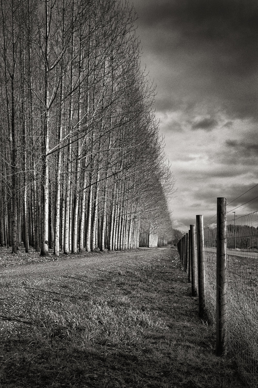 TreesA0550 B&W.jpg