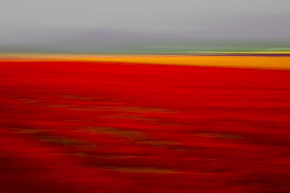 Tulips 4520.jpg