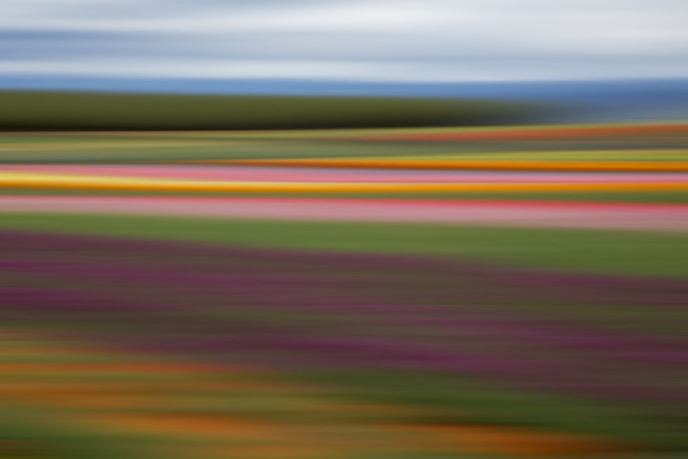 Tulips 5452.jpg