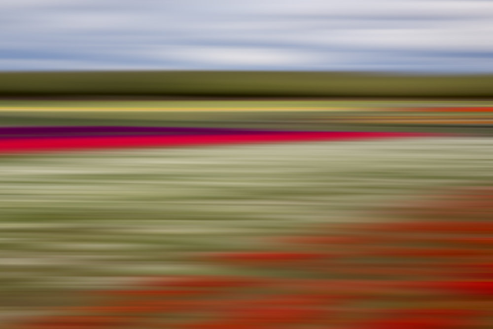 Tulips 5801.jpg