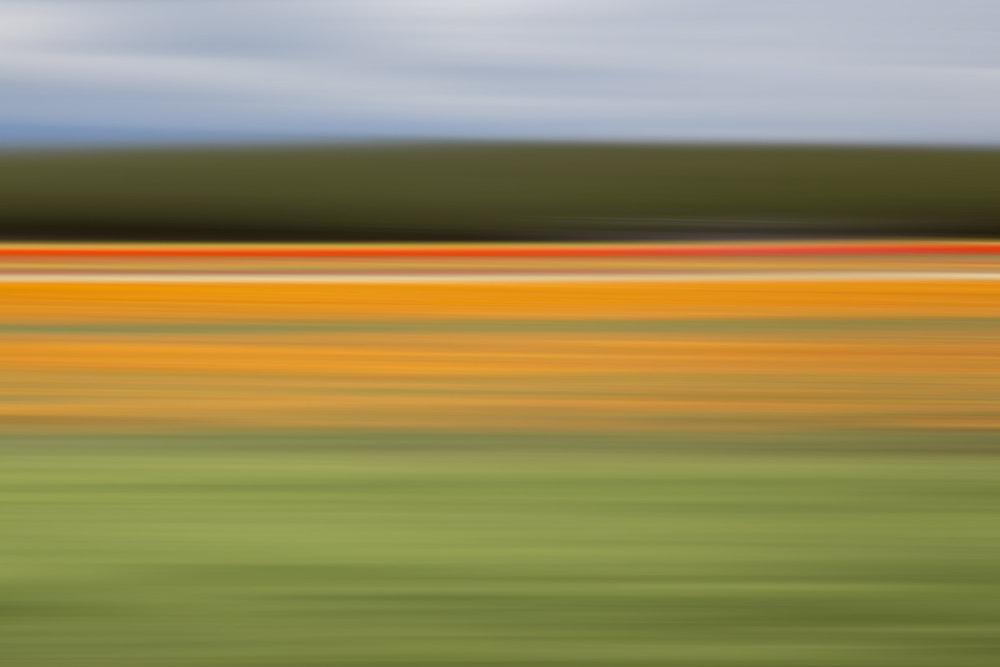 Tulips 6298.jpg