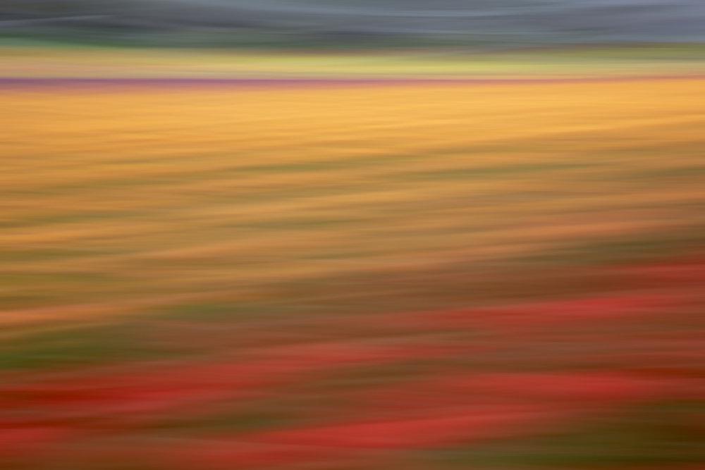 Tulips 4866.jpg