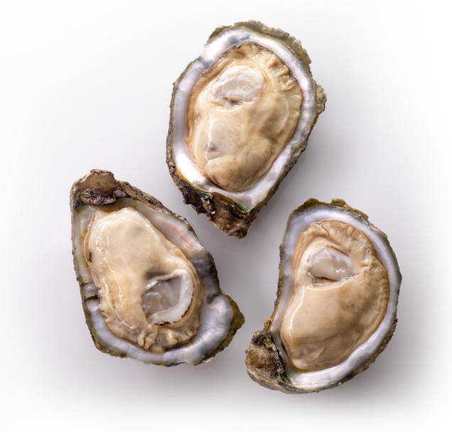 oysters1.jpglp